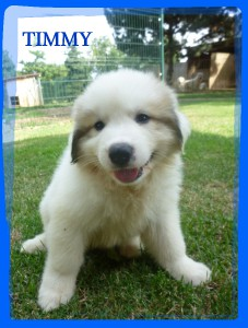 timmy-3.jpg